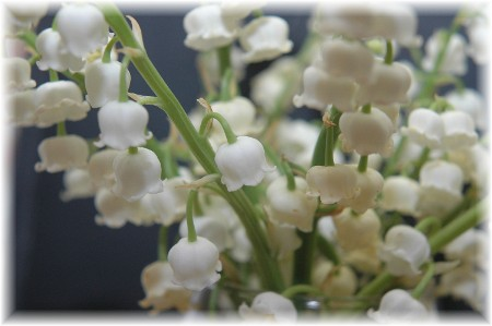 Lily of the Valley (Photo by Doug Weaver)
