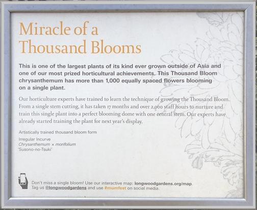 Longwood Gardens 1000 bloom Chrysanthemum sign 11/11/18
