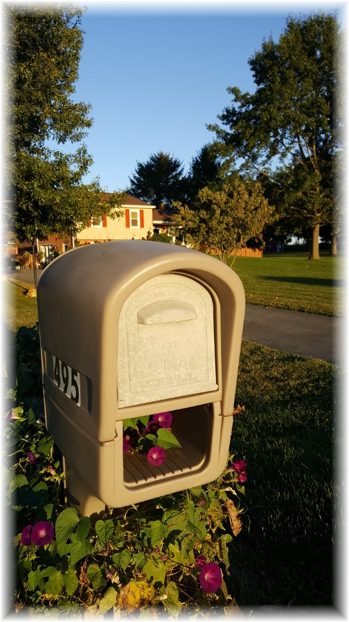 Mailbox morning glories 10/1/17