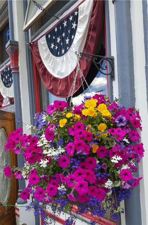 Petunias in Silverton, CO 7/8/16