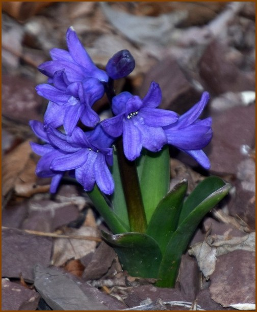 Purple flowers, Doris High