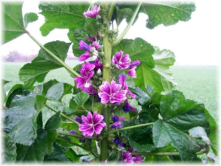 Photo of Malva flower arrangement with pumpkin