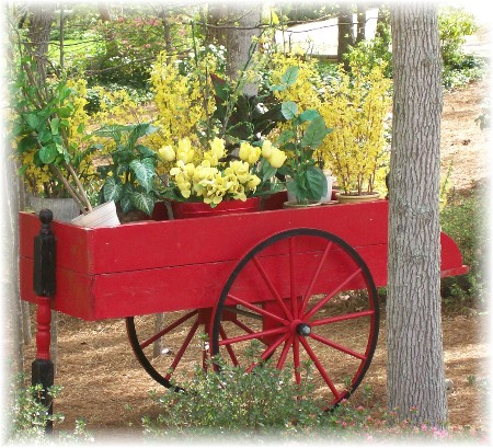 Red flower cart near Greensboro NC 4/7/10
