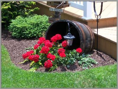 Red geraniums in barrel
