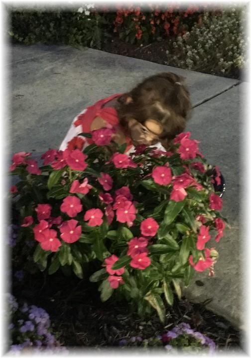 Rehoboth Beach DE house flowers 9/24/17