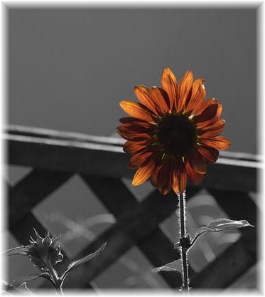 Flower (Photo by  Shawn Sauerwine)