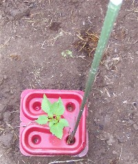 Weed control tray