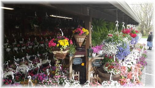 Village Farm Market flowers 4/27/16