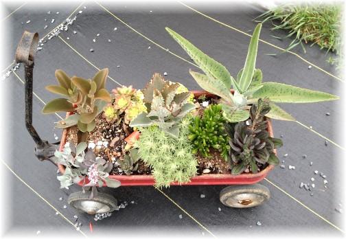 Amish flower arrangement in wagon 6/3/15