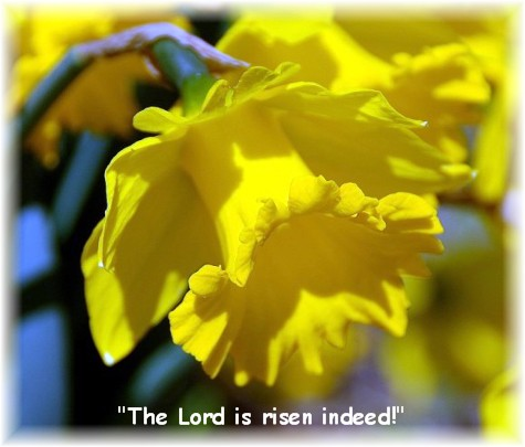 Yellow daffodil (photo by Doris High)