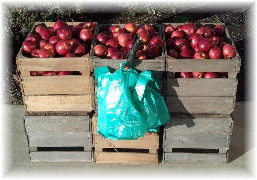 Christmas apples 12/23/12