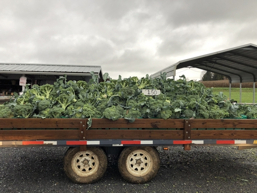 Corn Wagon broccoli