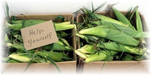 "Fresh corn ""Help Yourself"""