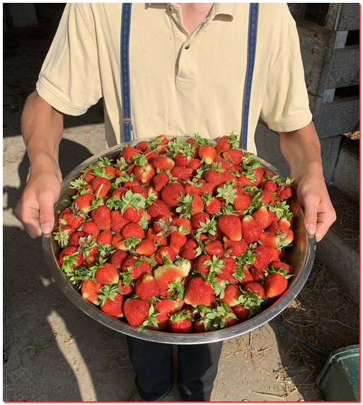 Fresh strawberries 5/30/19