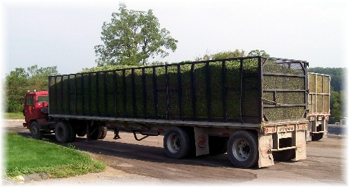 Trailer full of green beans