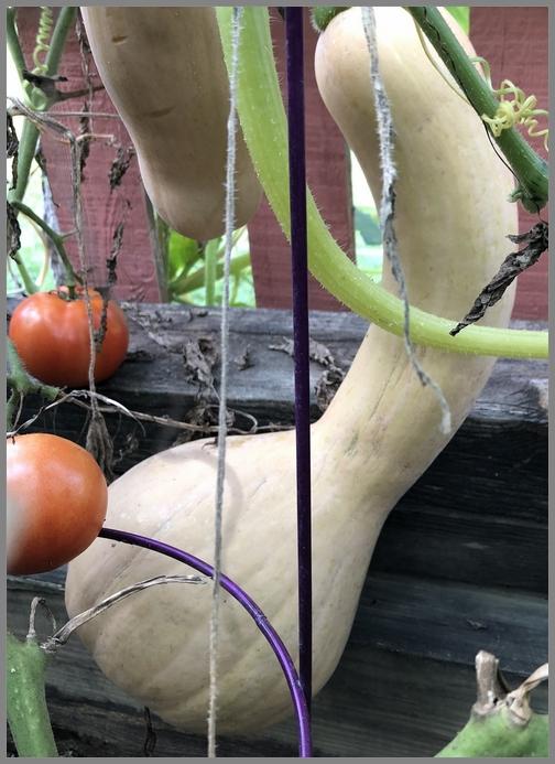 Neck pumpkin 8/29/18
