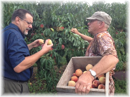 Peach picking 9/3/14