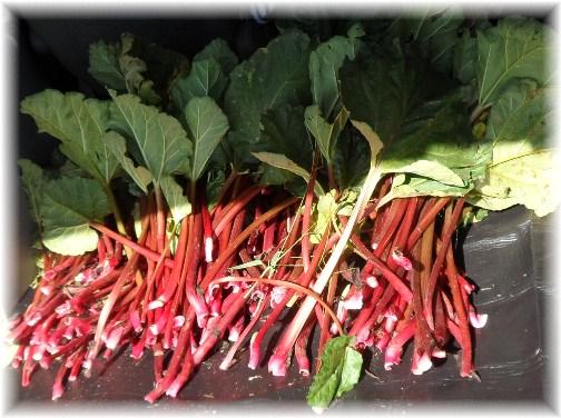 Rhubarb harvest 2012
