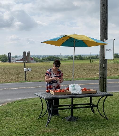New Holland roadside tomatoes 6/6/19