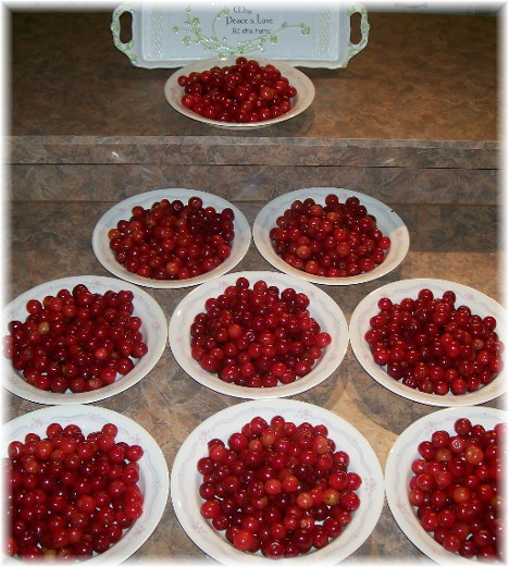 Sour cherries ready for prep 6/14/10