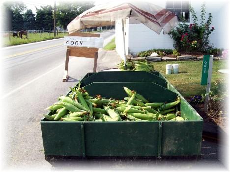 Sweet corn on wagon 6/26/10