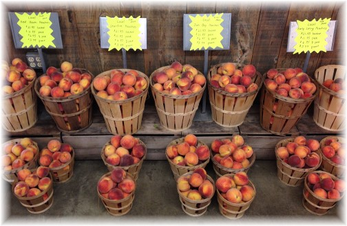 Village Farm Market peaches 8/14/14