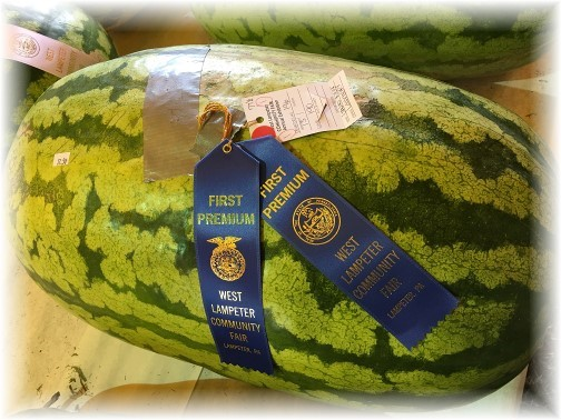Prize watermelon at Lampeter Fair 9/28/16