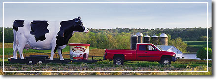 Photo of Giant Turkey Hill Dairy cow
