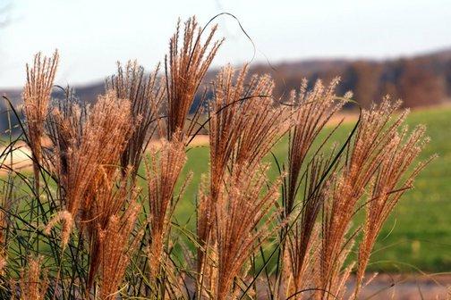 Grass photo by Doris High