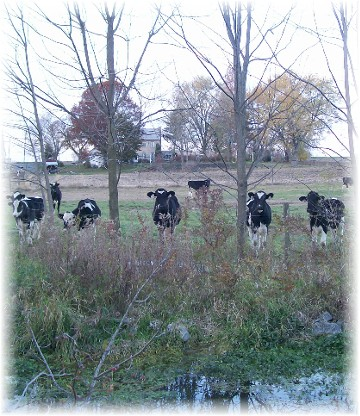 Afternoon walk in Lancaster County, PA  11/14/10