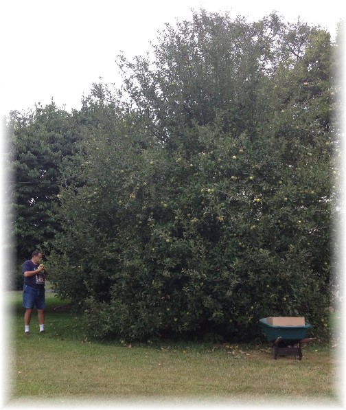 Apple picking 8/30/14