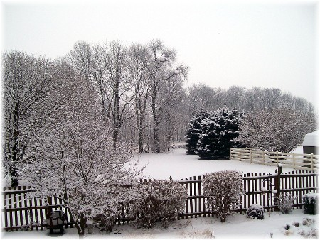 Snow in backyard 2/3/10
