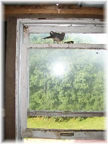 Barn bird 6/7/11