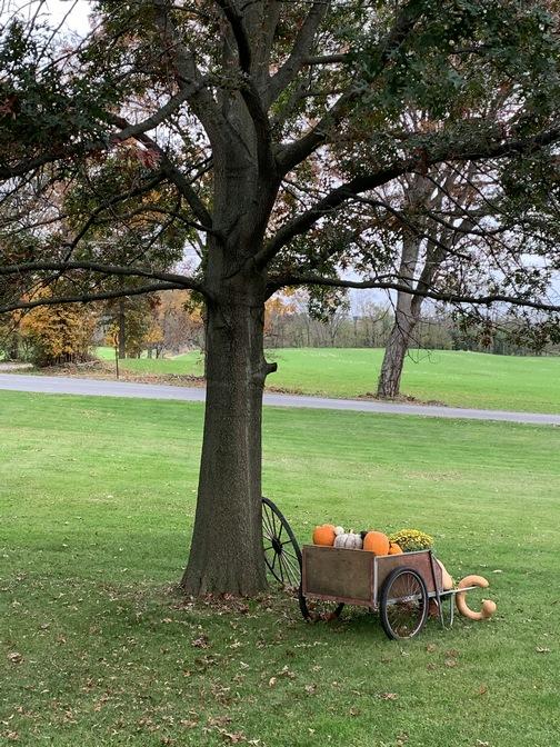Home lawn view 10/29/19