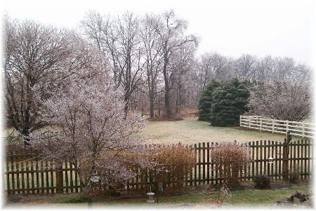 Backyard in icy rain