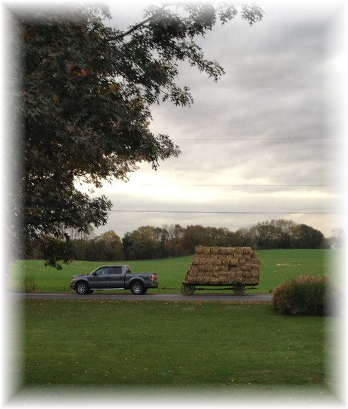 Hay hauling 10/27/15