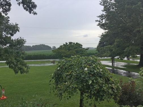 Rainy front view 7/11/19