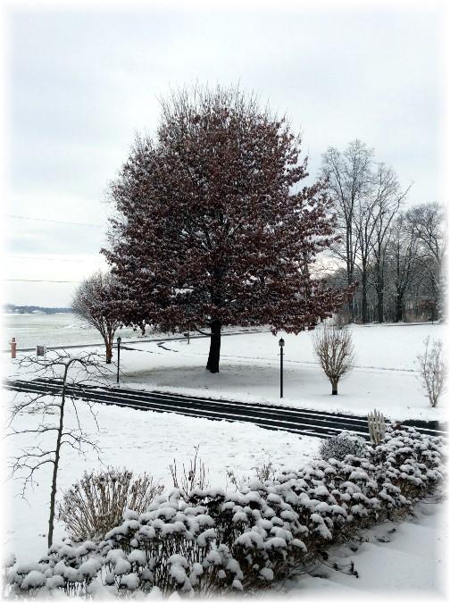 Snow scene 12/26/13