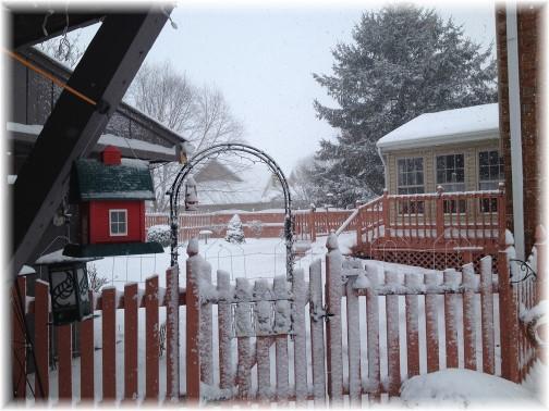 Backyard photo during snow storm 3/5/15