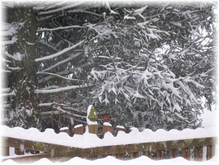 Snow storm cardinal 12/19/09