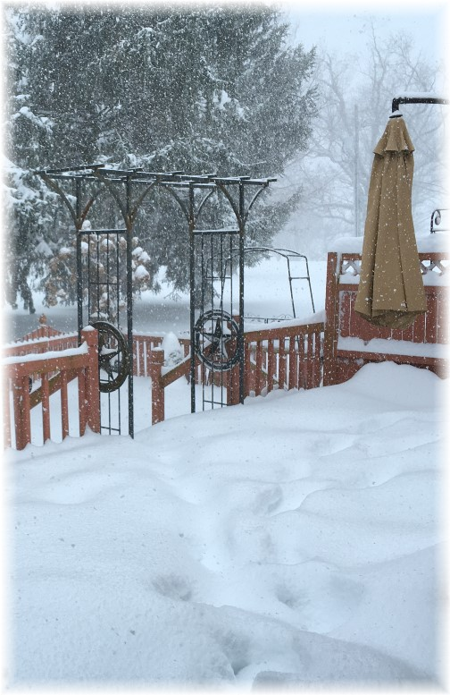 Snow storm deck view 1/23/16