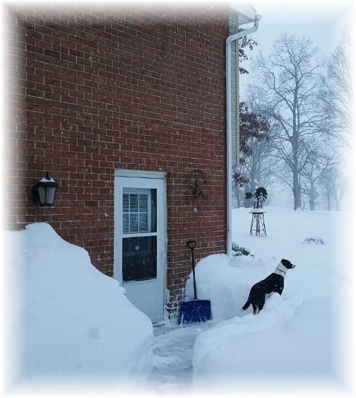 Snow storm 1/23/16