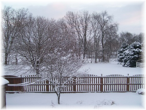 Snow view of our back yard 1/27/11