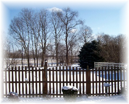 Backyard following snowstorm 3-3-09