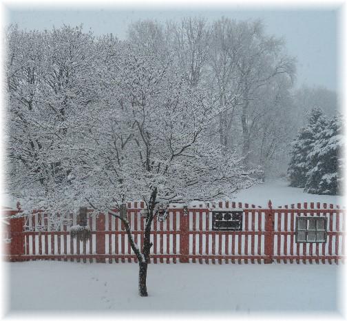 Backyard dogwood in snow 2/3/14