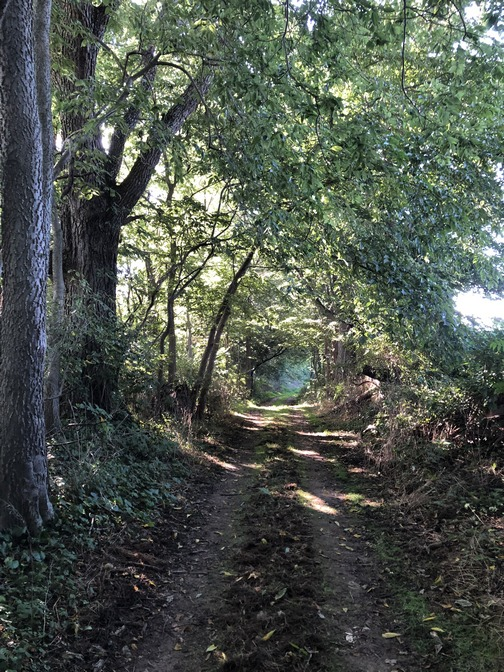 Trail To Donegal Springs