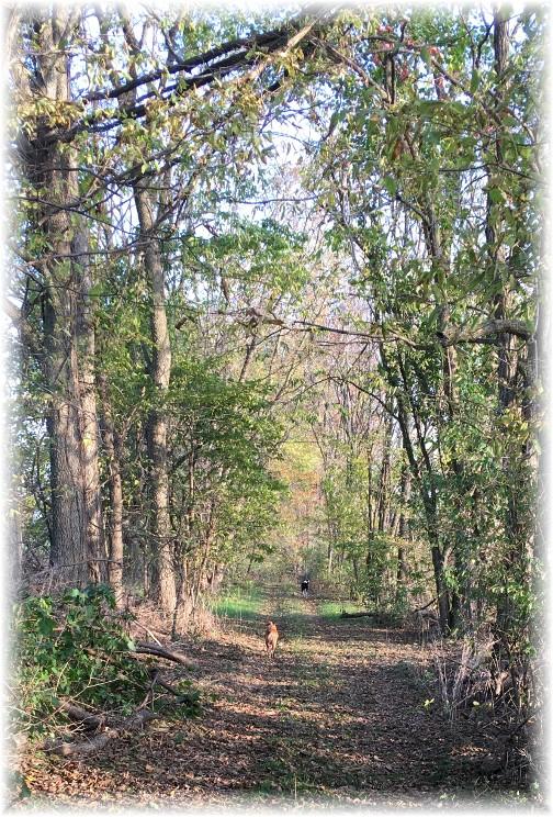 Trail walk 11/3/16