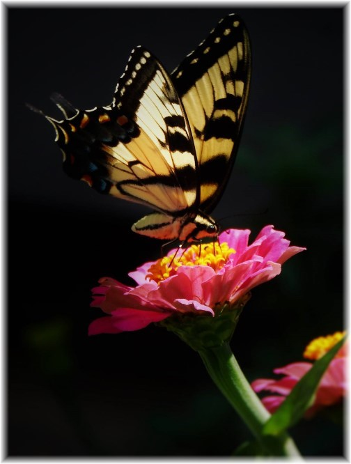 Butterfly on flower (Photo by Ester Weber)