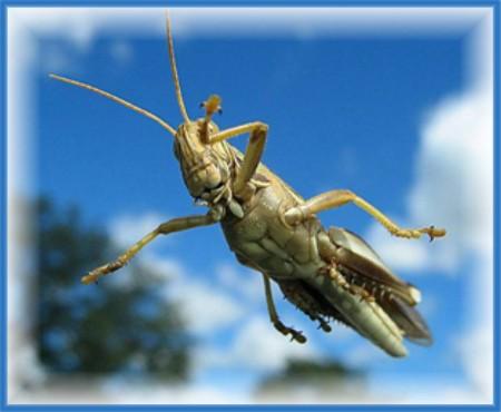 Flying grasshopper
