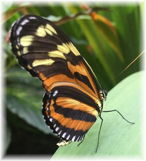 Hershey Gardens butterfly 5/23/17